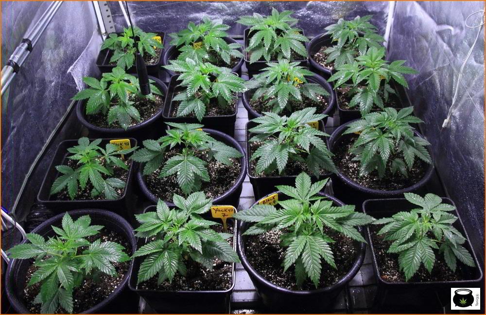 La planta denota salud