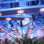 Estrés lumínico en plantas de marihuana, artículo Soft Secrets 2012-4