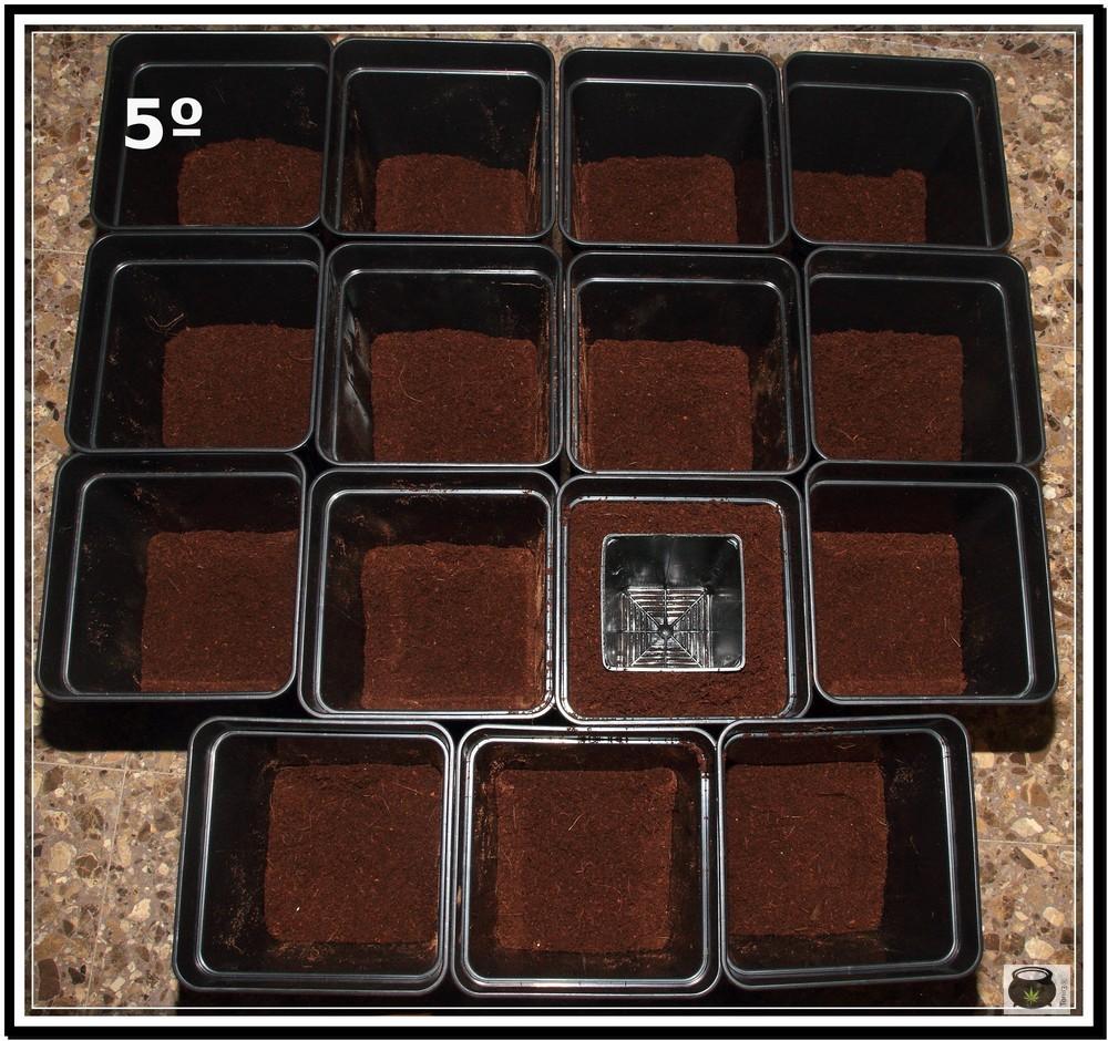 Trasplante de plantas de marihuana 5: Cómo y cuándo trasplantar la planta de marihuana paso a paso