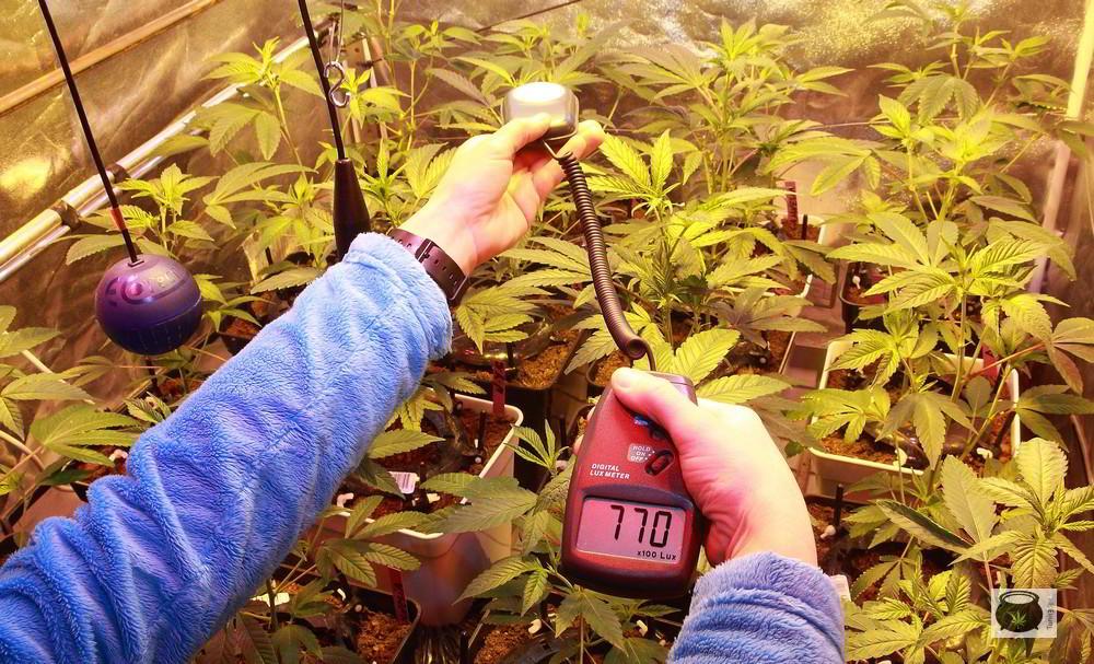 luxometro en cultivo de marihuana