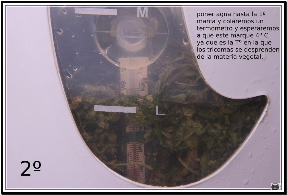 Paso 2 para extraer el hachis de la marihuana: Cómo extraer resina de la cosecha de tu cultivo de marihuana - Cómo hacer Ice o Lator