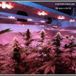2- 25-6-2013 Armario pequeño cultivo interior LED de marihuana 1,4×1,2×0,6