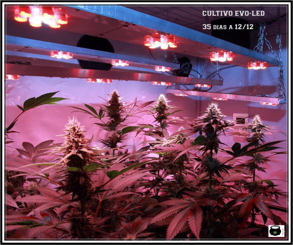Armario pequeño cultivo interior LED de marihuana 1,4x1,2x0,6 1