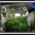 Sublimador de azufre para cultivos de marihuna