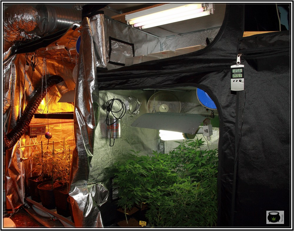 Elementos de cultivo o espacios separados en cultivos de marihuana