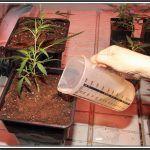 Cómo elegir el contenedor maceta adecuado para cultivar cannabis
