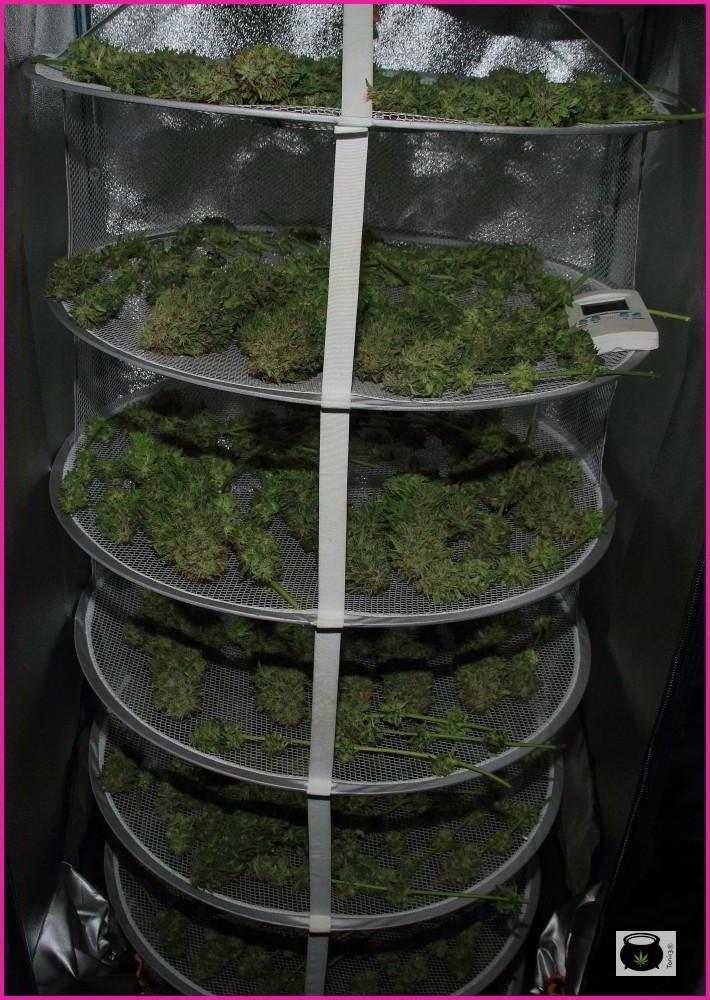 secadero de marihuana, armario pequeño y sencillo para el secado
