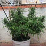 Contaminación lumínica en cultivos de marihuana