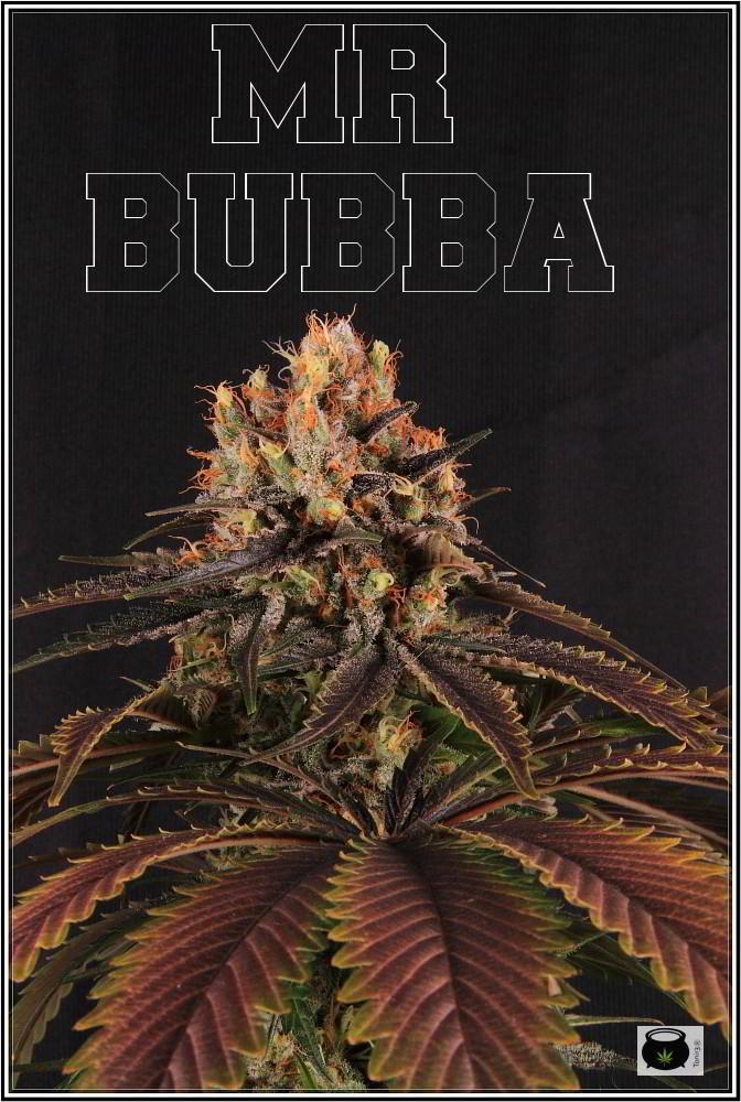 19- 27-7-2013  Dos armarios de cultivo de marihuana al mismo tiempo 2