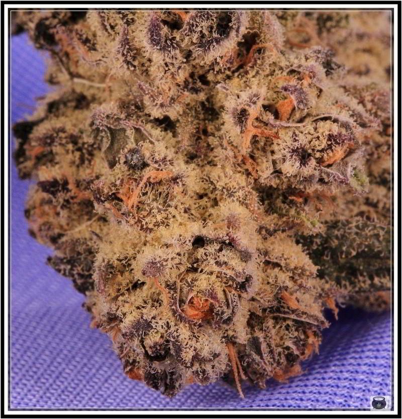 Variedad de marihuana Peyote purple 4