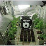 5- 28-8-2013 Enraizando plantas de marihuana directamente en contenedor de 1 litro