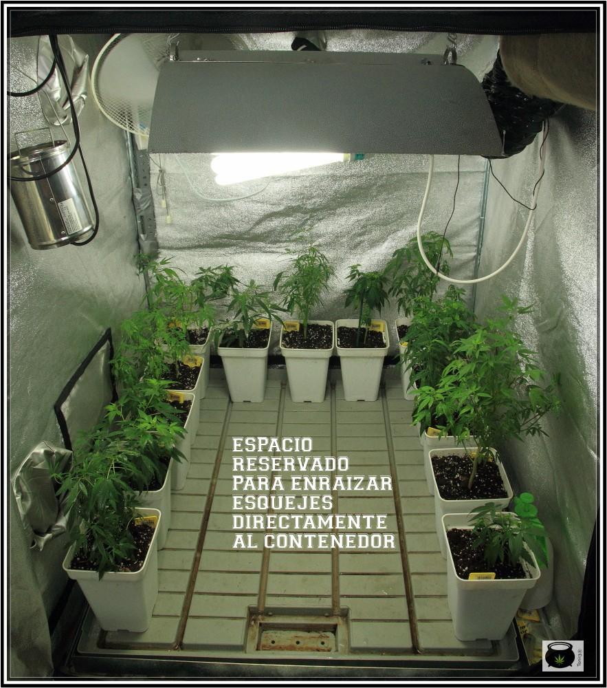 4- 27-8-2013 Comenzamos el cultivo de marihuana orgánico coco 3