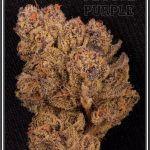 Marihuana (Cannabis, Ganja, Cáñamo) – Definición básica de la planta