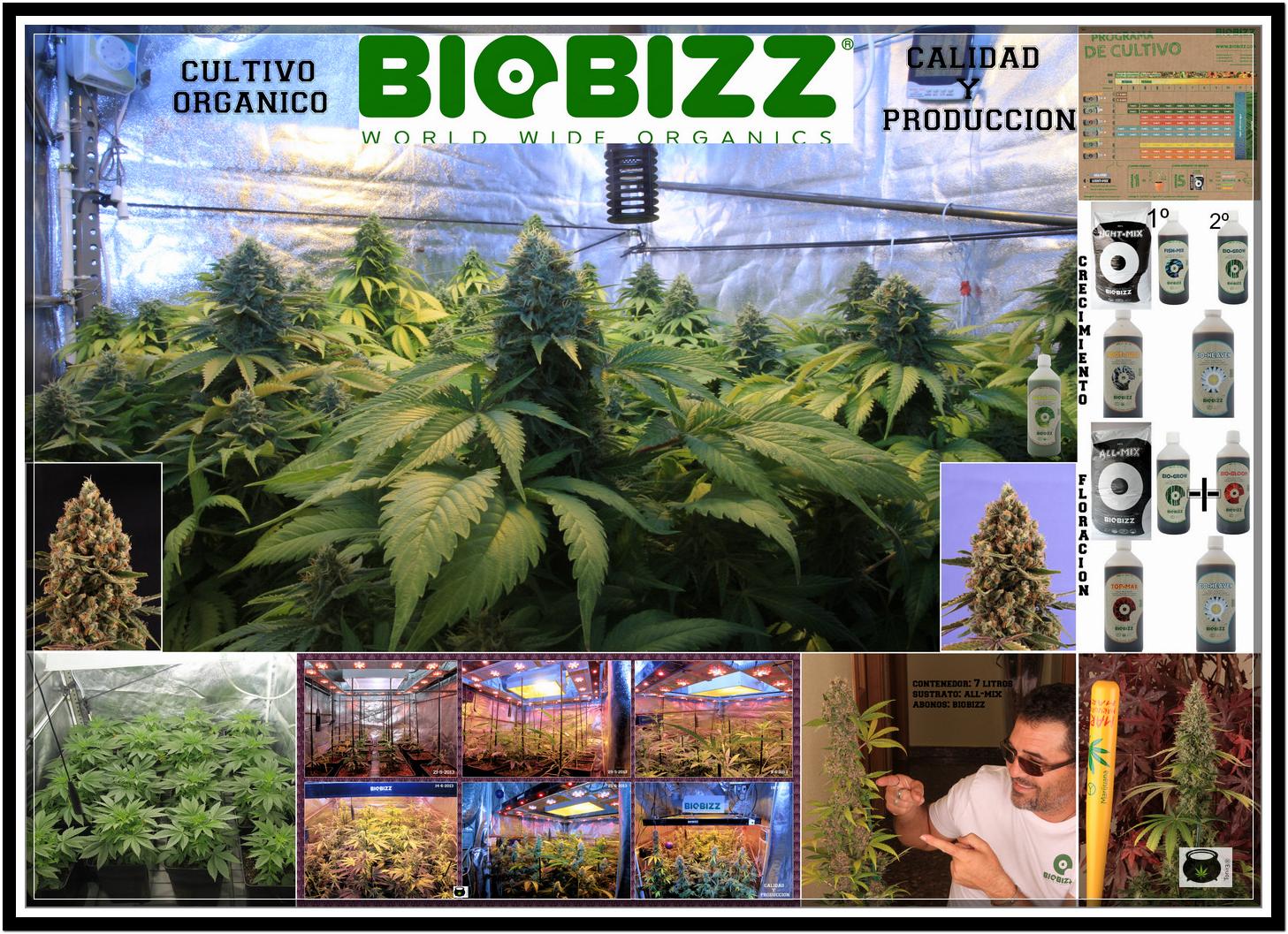 collage biobizz Toni13