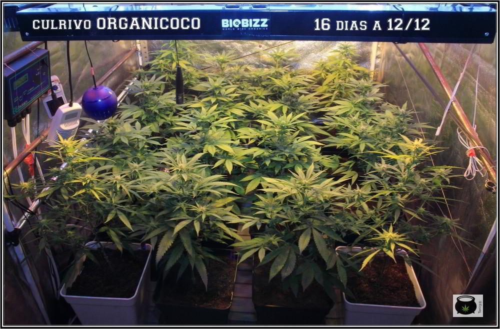 organicoco00010