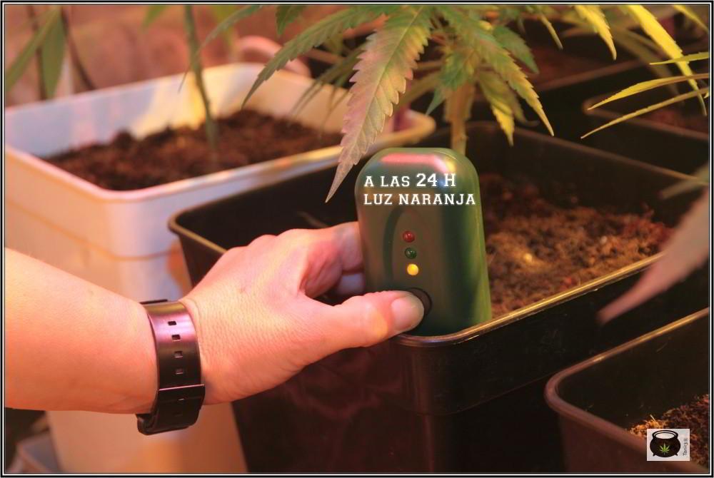 Fertometer para el cultivo de marihuana 2