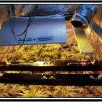 Reflector para un cultivo de marihuana de interior – Tipos y claves