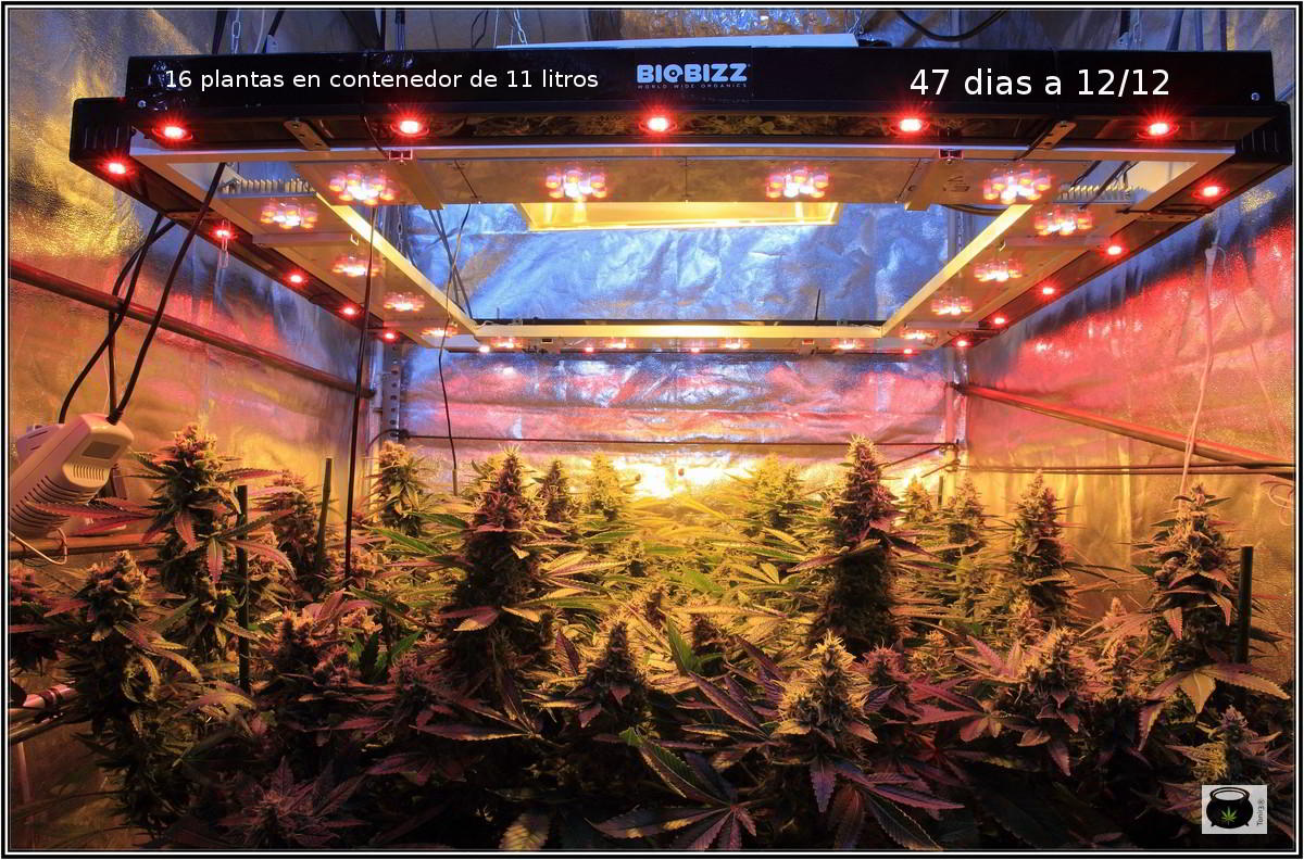 Iluminacion led interior cultivo