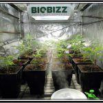 Maceta Air Max Pot para el cultivo de plantas de marihuana