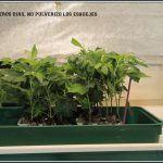 Esqueje de marihuana – Definición del término para el cultivo