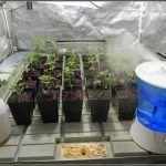 Clima (parámetros climáticos) – Cómo afecta mi clima al cultivo de marihuana