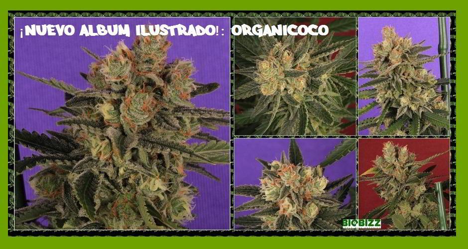 organicoco