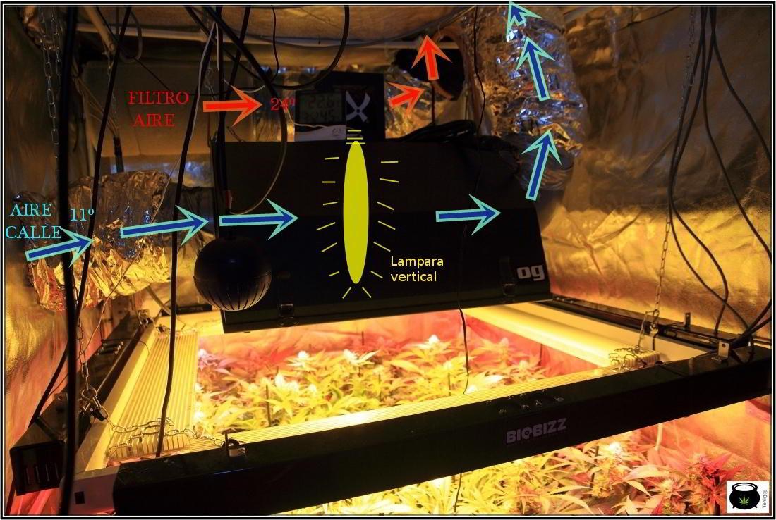 """como instalar un """"Sistema de doble extracción"""" en cultivos de marihuana 4"""