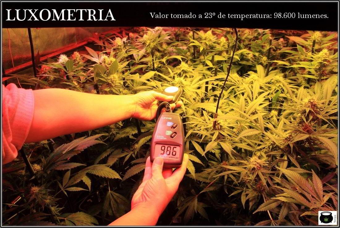 Reflector vertical refrigerado para el cultivo indoor de marihuana 2