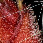 «Las charlas de toni13″…articulo publicado en: El cultivador Nº 12.