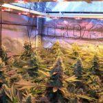 Técnicas básicas de cultivo de marihuana – Artículo Soft secrets 2014-1