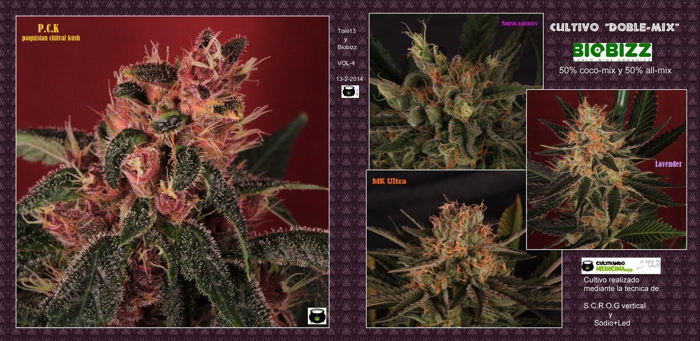 29- 14-2 2014 Álbum del cultivo de marihuana Doble-Mix 1