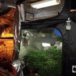 Armarios de cultivo o invernadero para cultivos de marihuana