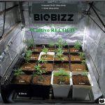 1- Comienza el cultivo de marihuana orgánico Organicoco 2: Recoco