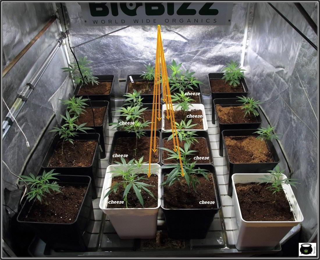 2- Más vale prevenir que curar en el cultivo de marihuana