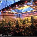 Sodio + Led – Técnica de uniformidad lumínica en cultivos de marihuana