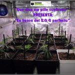 1- En busca del SOG perfecto en el cultivo de marihuana: 1º intento