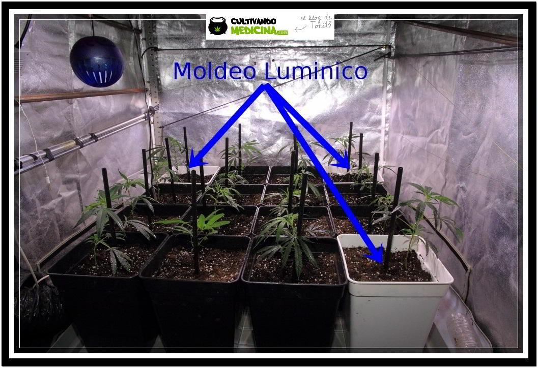 Moldeo lumínico en cultivos de marihuana de interior 2