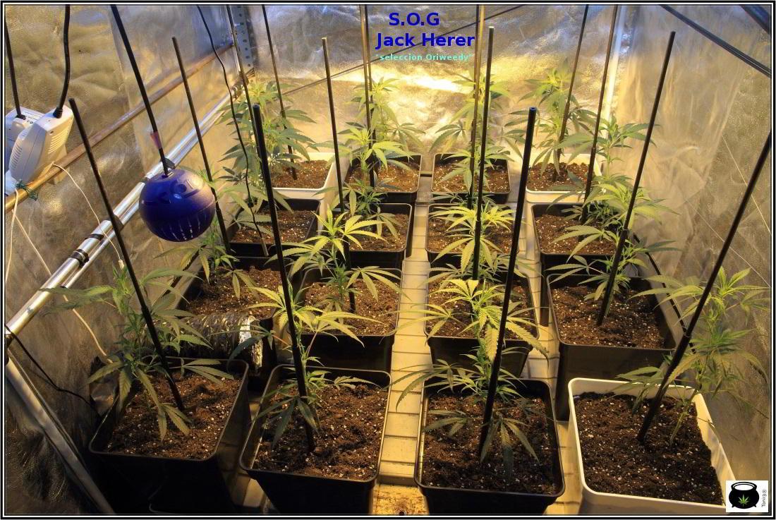4- Actualización del cultivo: 6 días a 12/12, parece que esto chuta 1