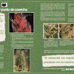 Revista Cáñamo Mayo-2014 Nº197…TRICOMA