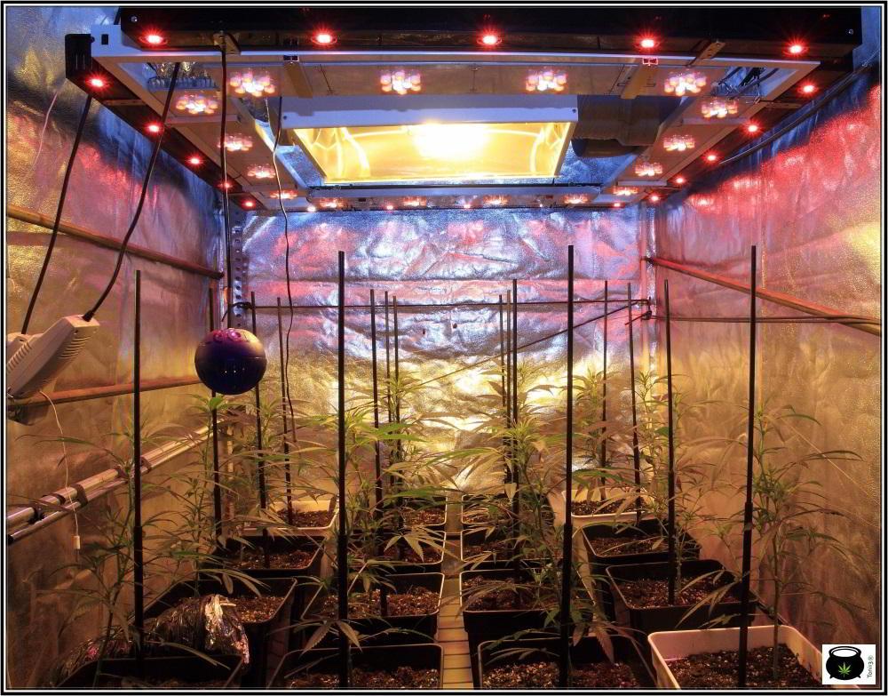 5- Sodio y LED trabajando a plena potencia, 10 días a 12/12 2