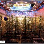 9- Actualización del cultivo de marihuana: 3 semanas a 12/12 SOG vertical