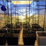 Bandeja de cultivo para armarios de interior de marihuana