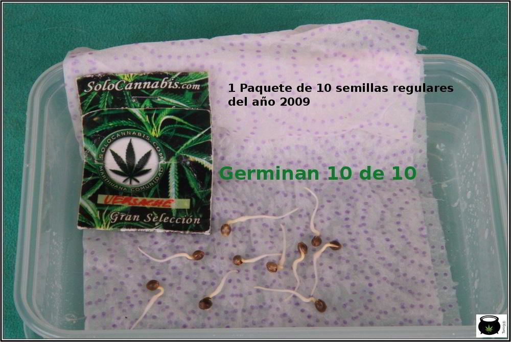 1- En busca del tesoro, cultivo de marihuana de interior con semillas regulares 1