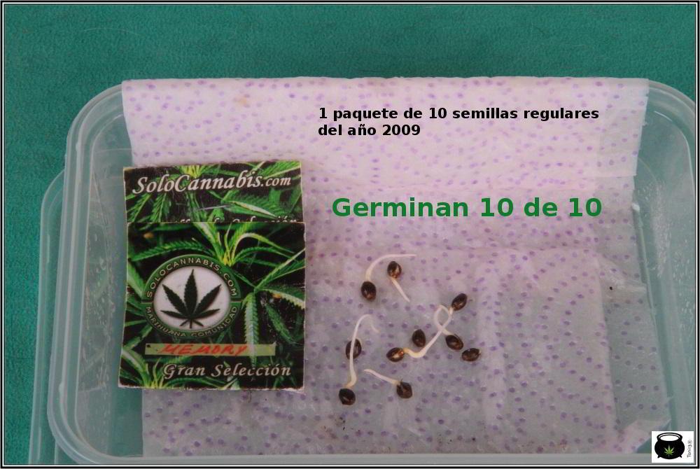 1- En busca del tesoro, cultivo de marihuana de interior con semillas regulares 3