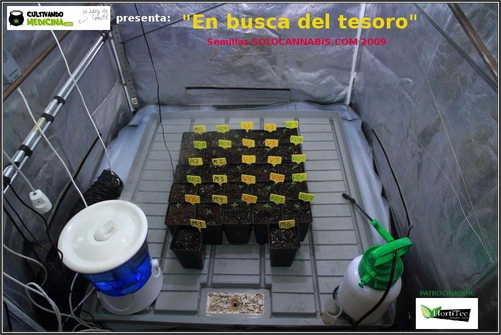 1- En busca del tesoro, cultivo de marihuana de interior con semillas regulares 4