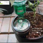 """Cuaderno de bitácora de toni13. Cultivando con una raíz """"artificial"""""""