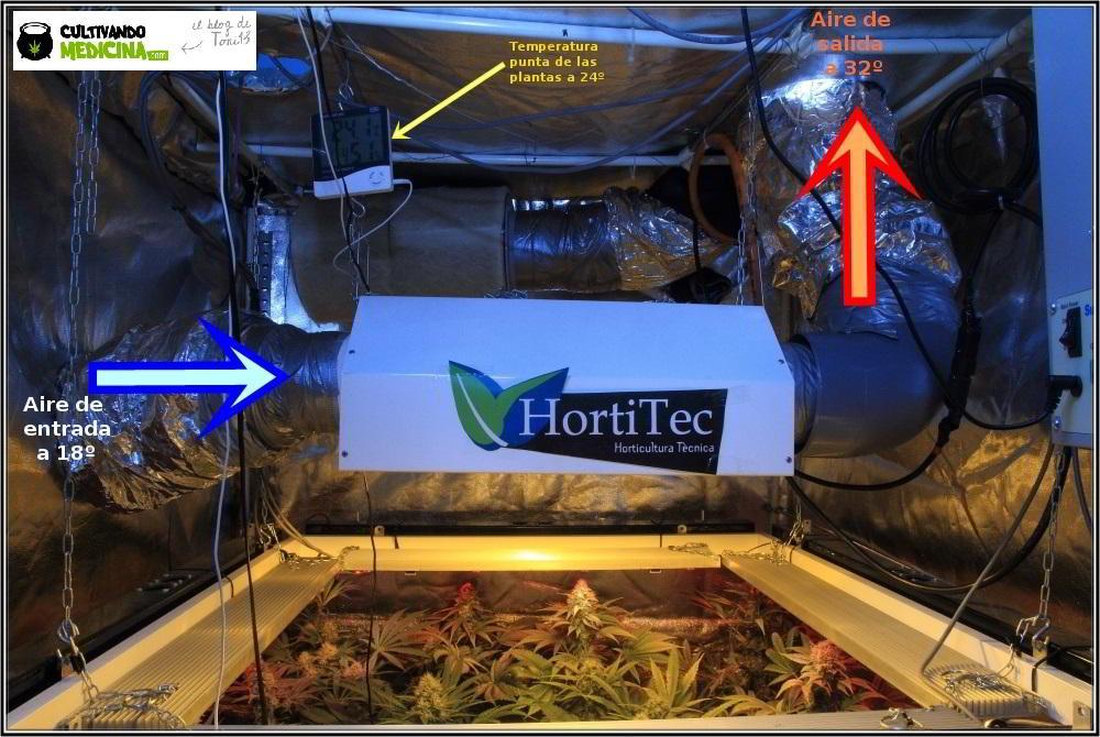 23- Actualización del cultivo marihuana: 38 días a 12/12: con un ojo, poco se ve. 1