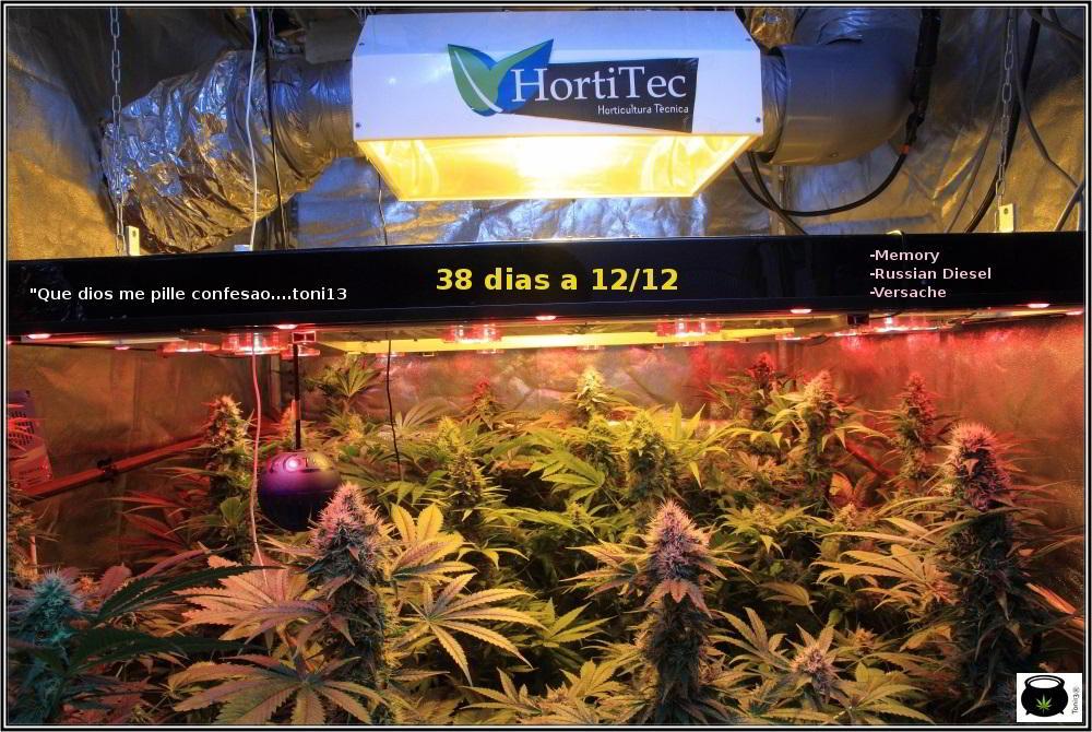 23- Actualización del cultivo marihuana: 38 días a 12/12: con un ojo, poco se ve. 2