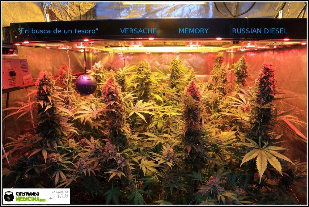 cultivo de marihuana interior semillas regulares hortitec toni13 2