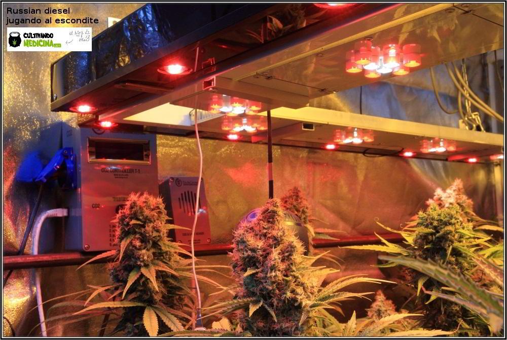 cultivo de marihuana interior semillas regulares hortitec toni13 6
